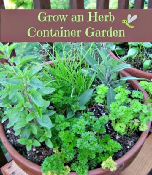 how to grow an herb container garden herbs gardens and container gardening. Black Bedroom Furniture Sets. Home Design Ideas