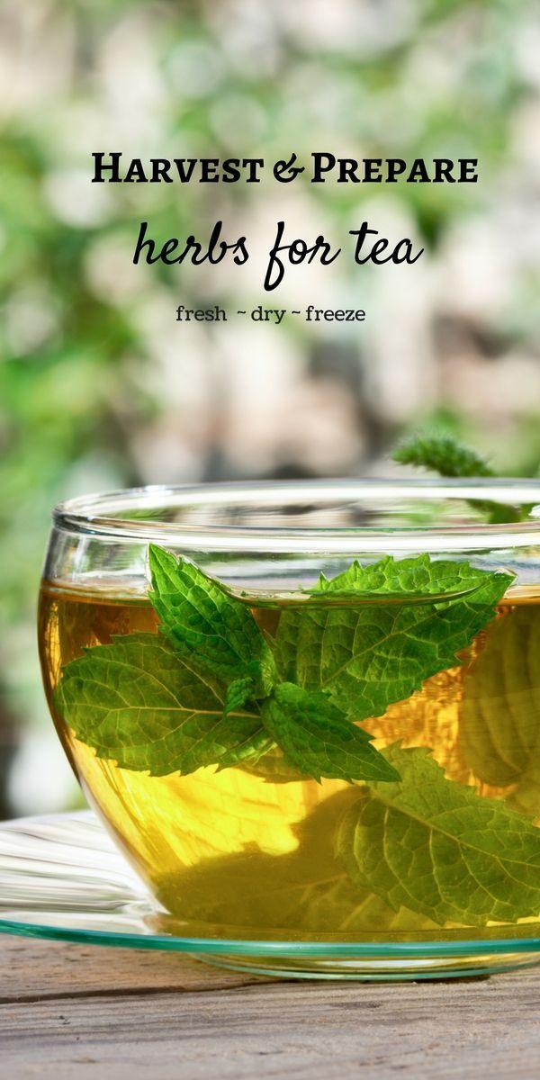 How to Harvest and Prepare Homegrown Herbs for Tea  #teagarden #tea #gardening #...