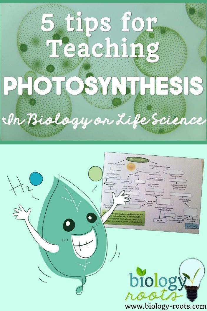 teaching photosynthesis Biology is one of the central branches of scientific knowledge, and is relevant to topics including medicine, genetics, zoology, ecology, and public policy as such, it has the potential to interest almost any student to be successful at teaching biology, however, you will have to think carefully.