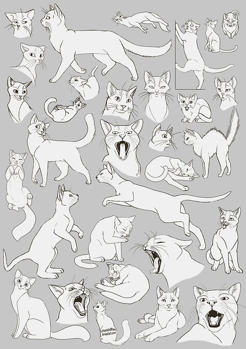 Cat anatomy                                                       …