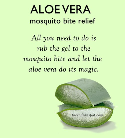 Aloe+Vera+for+mosquito+bite+relief