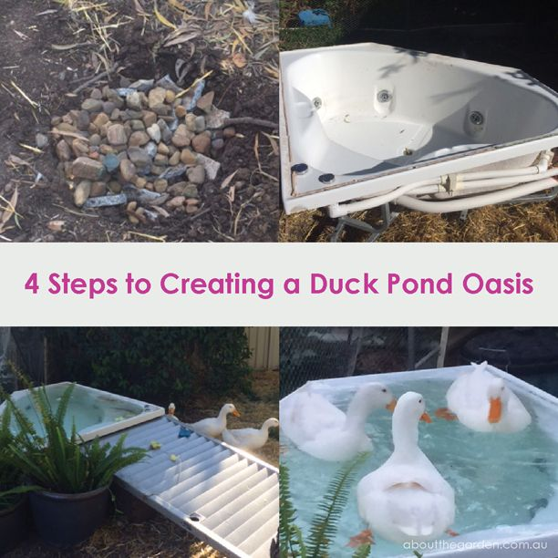 10 Ways To Create A Backyard Oasis: 57 Best Images About Ducks In The Garden On Pinterest