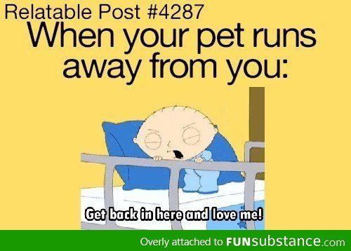 pet humor - Stewie - Family Guy