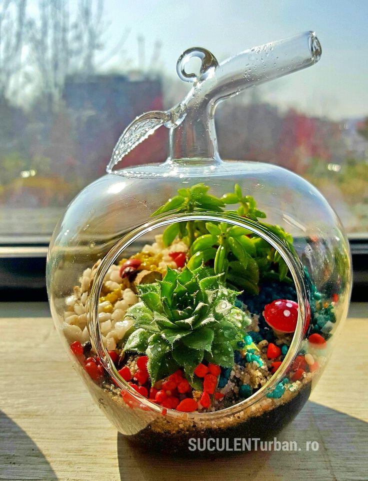 Mini terariu cu plante suculente în vas tip măr