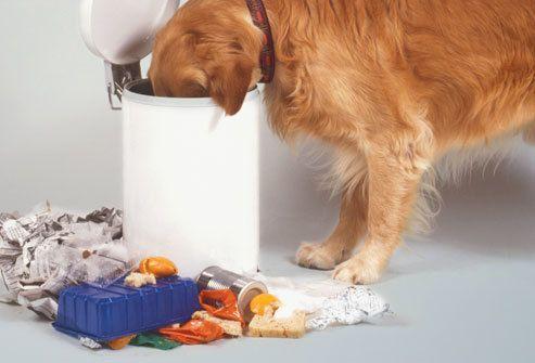 Hol a finom falat?  Hogyan szoktassuk le kutyánkat a kukázásról?   #kutya #dog #nevelés #kutyabaráthelyek