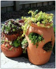 Fill strawberry pots with groundcovers and succulents.  I just happen to have two of these going of my own.