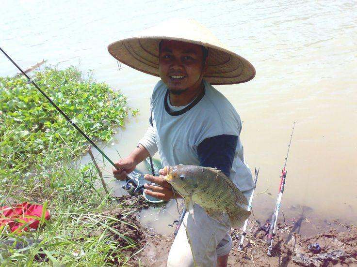 Umpan Jitu Ikan Nila