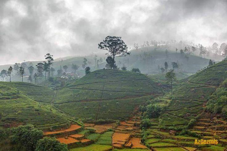 NUWARA ELİYA, SRİ LANKA, ÇAYIN BAŞKENTİ  Çay her ne kadar ülkemize yakın bir zamanda gelmiş olda da bizim için vazgeçilmezler arasında yer alır. Seylan Çayı ise herkes tarafından bilinen ve keyifle tüketilen bir ürün. Seylan aslında Sri Lanka ülkesinin eski adı. Nuwara Eliya ise Sri Lanka'da çay üretiminin zirve yaptığı bir bölge, yani Nuwara Eliya çayın başkenti...