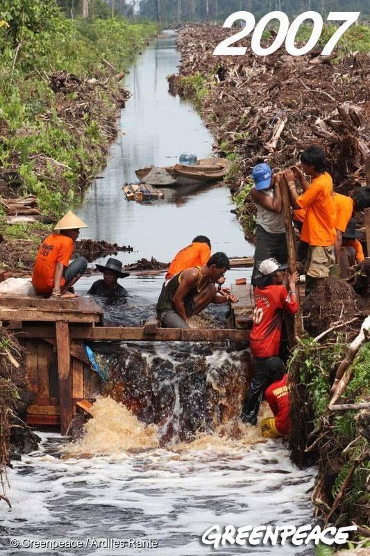Relawan Greenpeace menyekat kanal di kanal gambut yang dibangun oleh perusahaan sawit, Oktober 2007. Kanal dibangun untuk mengeringkan gambut sehingga bisa ditanami pohon sawit, namun ini adalah pangkal pengeringan dan rusaknya gambut yang kemudian akan menjadi tungku besar bagi kebakaran hutan.