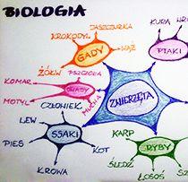 O mapach myśli w edukacji
