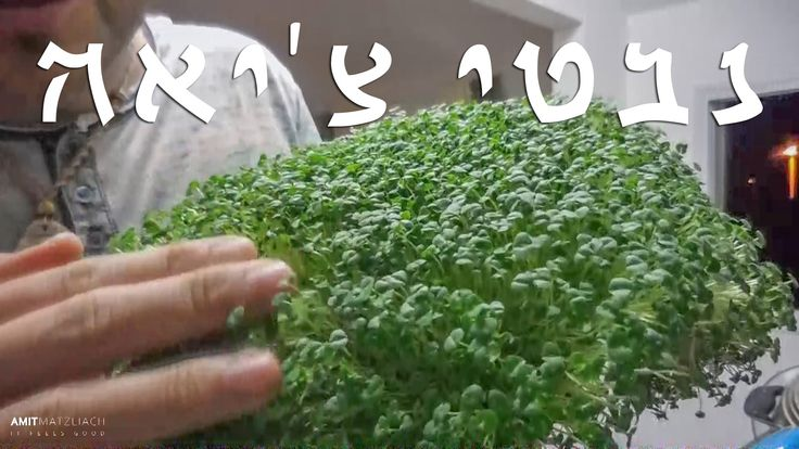 How to sprout Chia seeds - עברית (English subtitles)