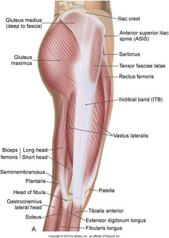 Vastus Lateralis And Itb Nptisacramento Www