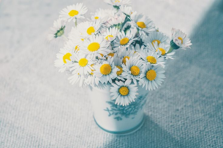 Çiçek, Papatya, Beyaz, Kır Çiçekleri, Vazo, Buket
