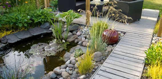 17 best images about flowers flower beds garden ponds for Pond shade ideas
