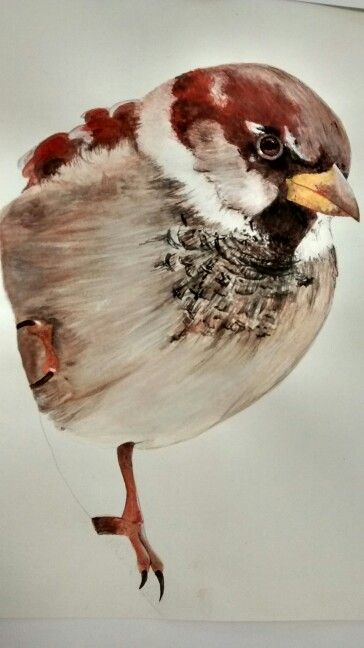 Bird wildlife art, gouache painting by Karolina Czerwinska