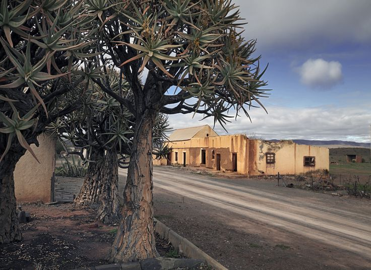 The abandoned village of Brandkop with Quiver Trees. Between Loeriesfontein and Nieuwoudtsville. Hantam Karoo.