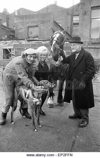 Steptoe and Son photocall to announce that a second feature film of the successful comedy series is to be made. Called 'Steptoe and Son Ride Again' the film - released 1973 - stars Wildred Brambell as Albert Steptoe, Harry H Corbett as his son Harold Steptoe, and Diana Dors, pictured Thursday 15th February 1973. *** *** 15th February 1973 - Stockbild