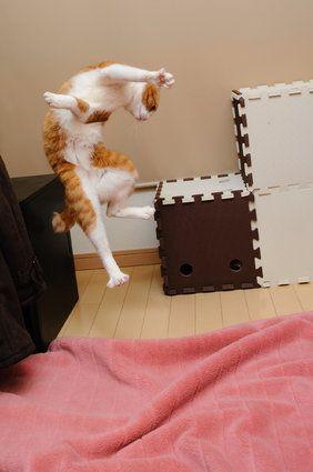 シェーからバンザイまで......凄いジャンプをする猫たち(画像)