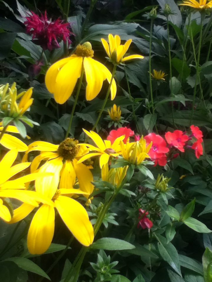Rudbeckias, phlox and bee balm.
