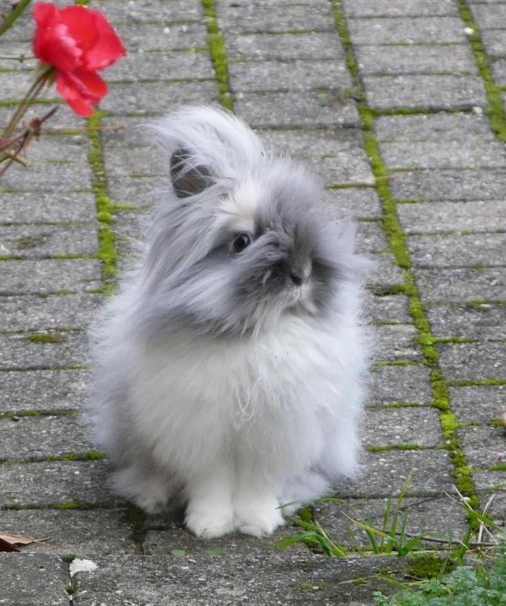 le lapin est une lagomorphe
