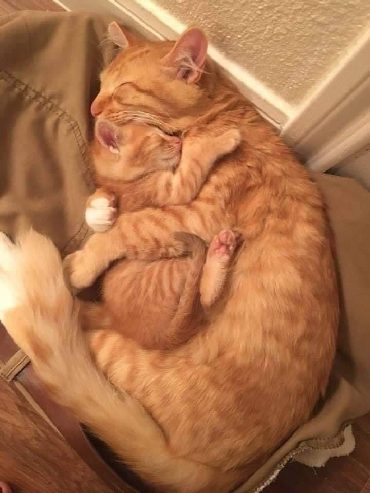 Motherly Embrace Cat Hug Cute Baby Animals Cats Kittens
