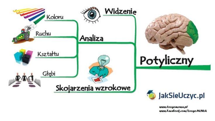mozg_płat_potyliczny.jpg (968×547)