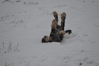 Gårdstunet Hundepensjonat: ENDELIG kom det litt snø - til stor glede for hund...