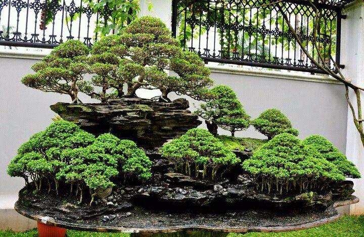 Breathtaking bonsai forest landscape