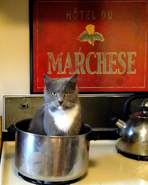 67 Best Images About Cats In The Kitchen ^..^ On Pinterest