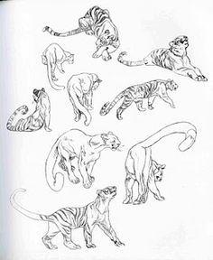big cats drawings sketches - Buscar con Google
