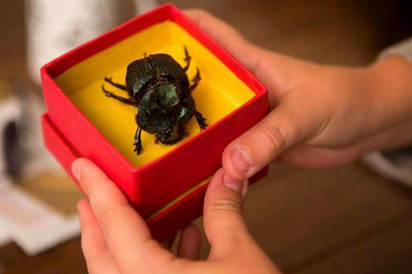 Crítica | O Escaravelho do Diabo (2016)