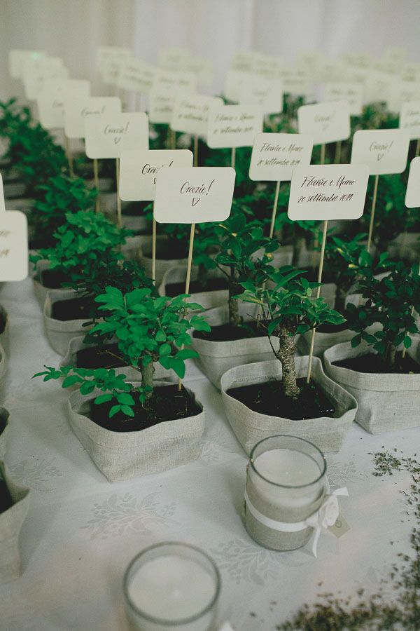 bonsai wedding favors for a country wedding
