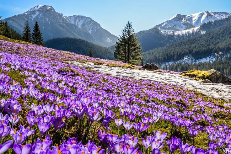 Dolina Chochołowska wiosną