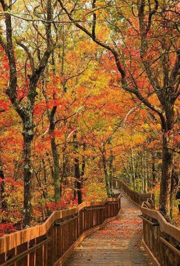 Mt cheaha state park in alabama gorgeous fall foliage for Landscaping rocks tuscaloosa al