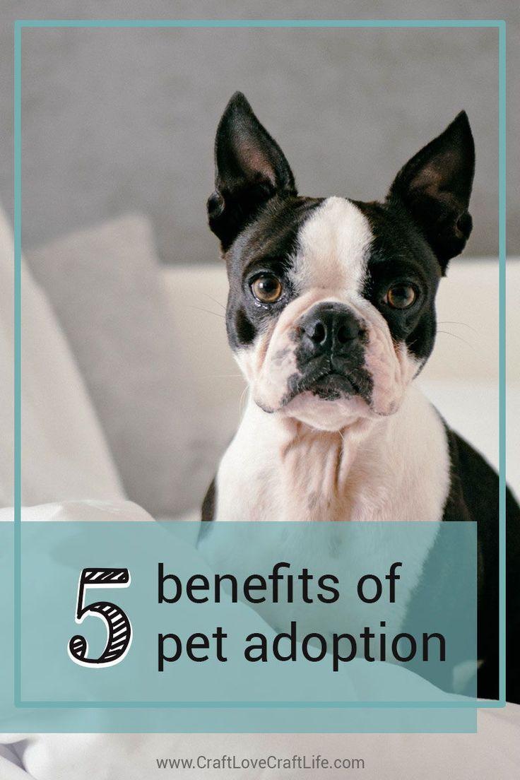 Pin On Pet Adoption Facilitator Career