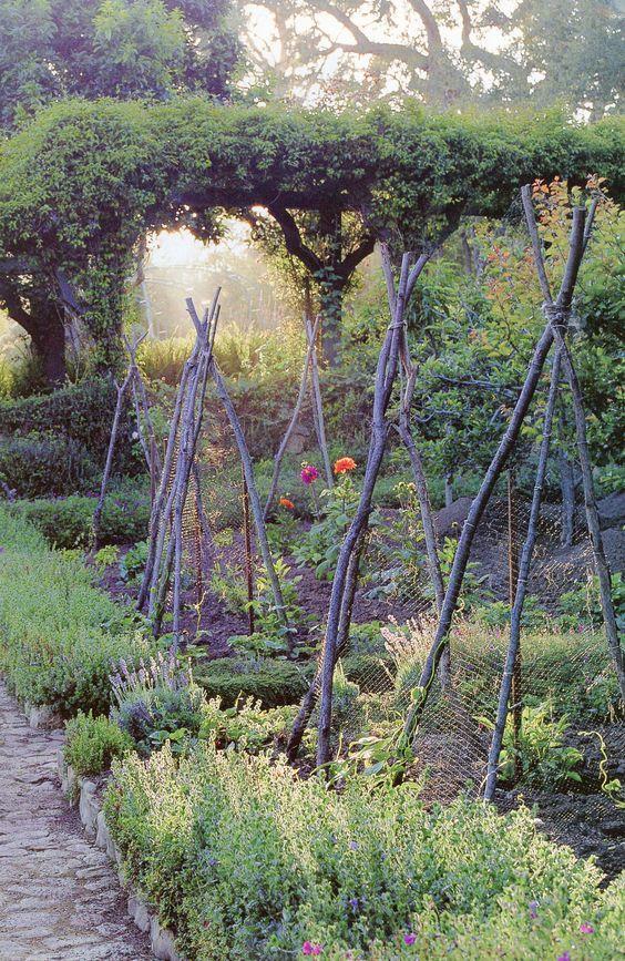Perfect tripods for the vegetable garden. (scheduled via http://www.tailwindapp.com?utm_source=pinterest&utm_medium=twpin&utm_content=post57596544&utm_campaign=scheduler_attribution)