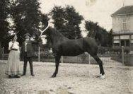 Zwarte merrie 'Ceres' winnaar van het concours hippique te Den Haag. In de internationale klasse van paarden boven de 1.60 meter won het de tweede prijs en in de nationale klasse de eerste prijs. De cup werd uitgereikt door Jhr Louis van Loon aan de heer Heuff Cellendonk van de stoeterij Heuff Cellendonk te Avezaath bij Tiel. Deze firma van luxe paarden leverde verscheidene paarden aan de Koninklijke stallen en had een gevestigde reputatie in binnen- en buitenland. Avezaath, Nederland, 1911.