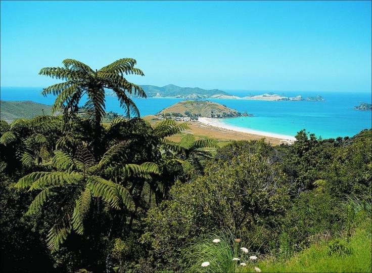 Matauri bay :)Google Image Result for http://www.moatrek.co.nz/images/800/tours/2_Matauri%2520Bay.JPG