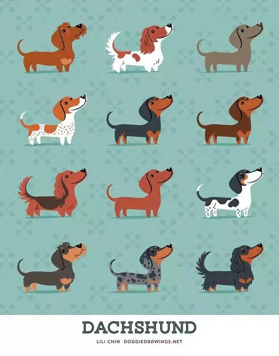 Dachshund of every fashionable doxxie color! Dashshunds, Dashshund Print, Dashshund Decor, Home Decor, Dogs