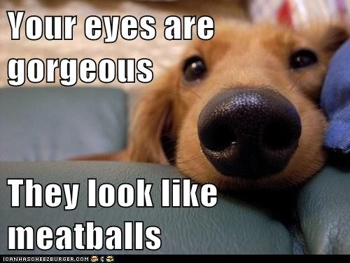 Hahaha ♥. Soooooooo cute! :): Silly Dogs, Funny Pictures, True Romances, Doggies, Puppys, Funny Animal, Meatballs, Funny Dogs Pictures, Eye