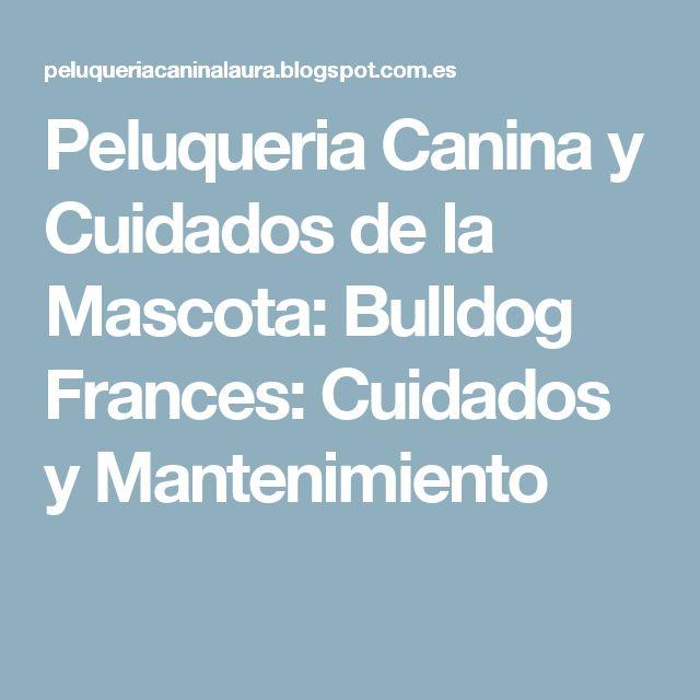 Peluqueria Canina y Cuidados de la Mascota: Bulldog Frances: Cuidados y Mantenimiento