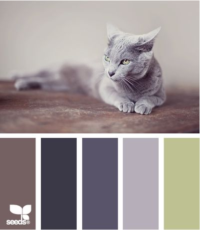 Why not paint your house to match your cat?