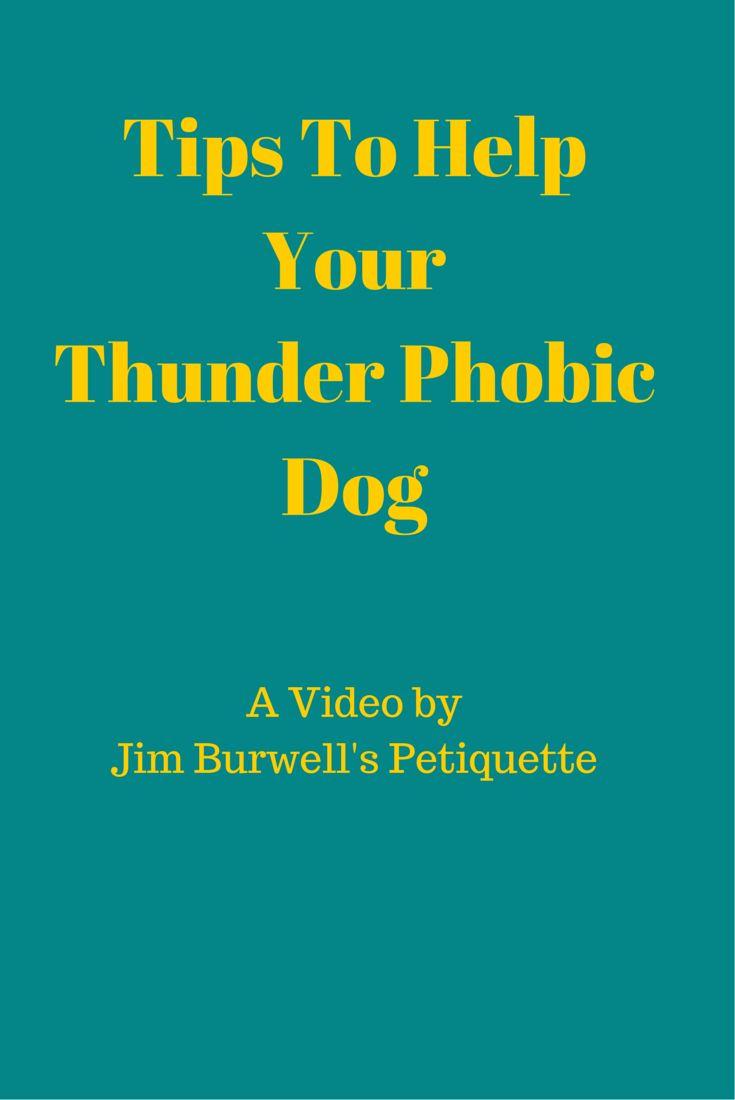 36 best Dog Training Tips images on Pinterest | Dog ...
