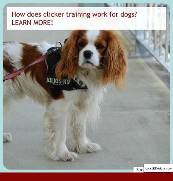How To Train A Dog To Stop Biting Strangers And Pics Of How To Train A Dog To Stay In The Back Of The Tru Dog Training Dog Training Obedience Best