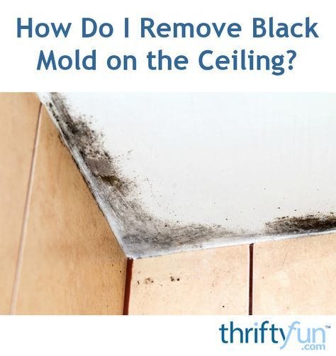 This is a guide about removing black mold on the ceiling. Black mold can be difficult to get rid of anywhere in the home, but the ceiling can be one of the most challenging.