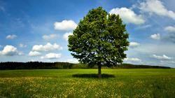 Molise: #Giornata #Nazionale #Alberi nei vivai piante gratis per verde pubblico (link: http://ift.tt/2fqT5MN )