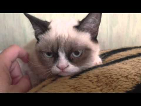 Do not disturb Grumpy Cat! #GrumpyCatVideo Published on Sep 23, 2012