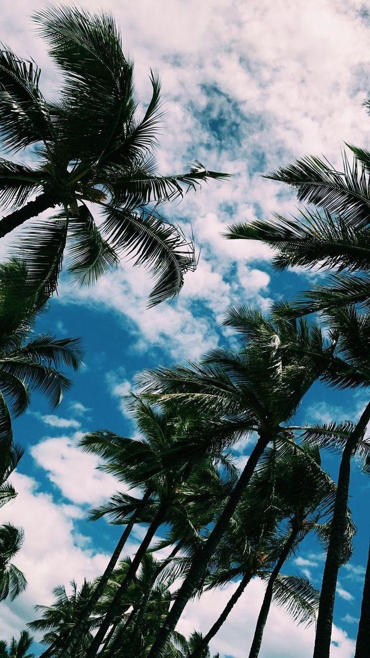 Iphone X wallpaper palm , beach, sky, aesthetic – Cara