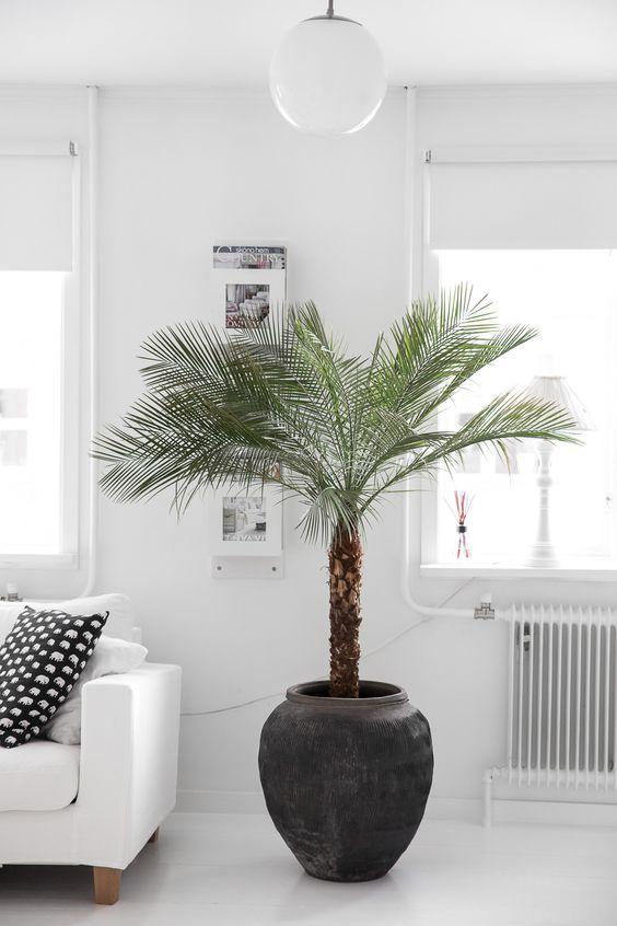 De palm als woonplant - MakeOver.nl