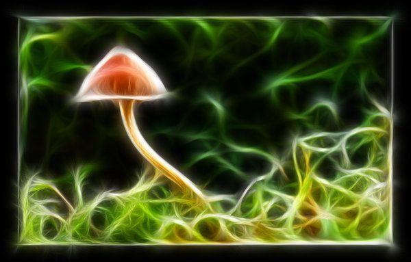 fractal mushrooms images | Fractal mushroom by ~kodo34 on deviantART